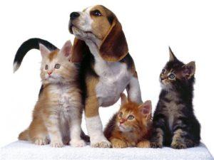 Лечение демодекоза у кошек и собак